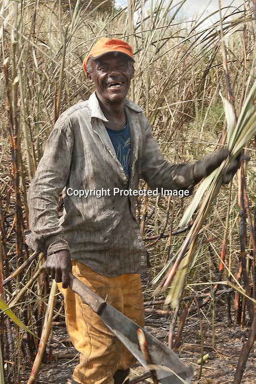 Seasonal sugarcane worker haversting sugarcane by hand in a farm located in highway PE 60 in Ipojuca in the Northeast state of Pernambuco, Brazil. The field is first set on fire. The fire burns dry leaves without harming the stalks and roots. Harvesters then cut the cane just above ground-level using special knives.<br />