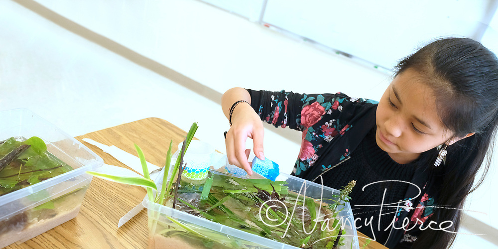 This is a Science of Technology class at Mountain Island Lake Academy.  This student made this model of an oil spill and she's studying how oil mixes with water and how to remove the ill from the water.  Teacher is Shannon Morrison.