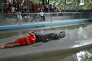 """21/07/2011<br /> Crocodile Wrestling Thailand Style<br /> On 1st February 1992, the Million Years Stone Park and Crocodile Farm was opened to tourists and the general public for the first time. Since then, new decorations and things of interest have been added to the Park continuously. Furthermore, amusing and thrilling performances have been held regularly, including daily shows of men fighting with adult crocodiles bare-handed, making the Park a famous tourist destination of Thailand, attracting thousands upon thousands of visitors, both Thais and foreigners, every year.<br /> Our Photographer Tom Howell, who we sent along to the show said: ' The Crocodiles are large big toothed and very angry crocs, They all look mean and ready to eat someone. Its quite amazing how the thai performers drag the crocodiles from there pit and make them do stunts. At one point he ran and slide across the pitt and straight into the jaws of an opened mouthed huge crocodile""""<br /> ©Tom Howell/Exclusivepix"""