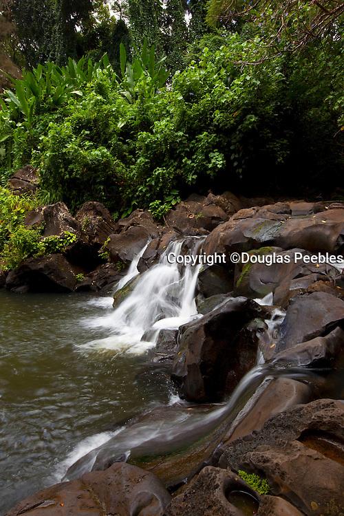 Jackass Ginger Waterfall, Judd Trail, Nuuanu Valley, Honolulu, Oahu, Hawaii