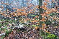 Rotete skogsinteriør ved Mosvatnet. Slike områder med mye død ved og gode gjemmesteder er svært vikitge for det biologiske mangfoldet.