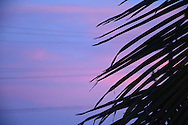 Photo sunset wall art. Santa Monica pastel pink and purple sky, palm tree, beach. Matted print, Westside, Venice, Los Angeles, Southern California photography. Fine art photography limited edition.
