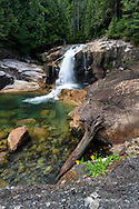 Lower Falls and a flowering Streambank Arnica (Arnica amplexicaulis) at Golden Ears Provincial Park in Maple Ridge, British Columbia, Canada.