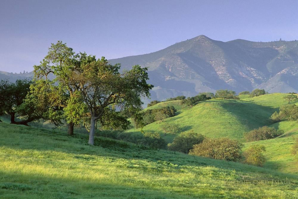 Green hills in spring at sunset Foxen Canyon Road, near Los Olivos, Santa Barbara County, California