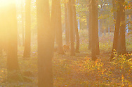 Rencontre en forêt. L'art du camoufalge.