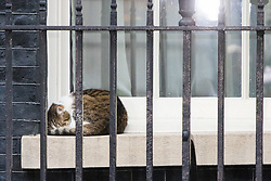 London, June 27th 2017. Larry the Downing Street cat sleeps on a windowsill whilst the uk cabinet meets inside no 10 Downing Street.
