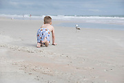 A young boy crawls toward a gull at the beach.