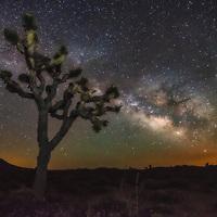 Milky Way over a Joshua Tree in the Mojave Desert, California.