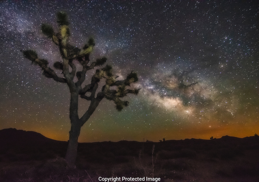 Milky Way over a Joshua Tree in the Mojave Desert, California.