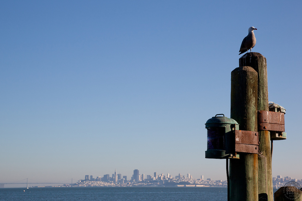 """Seagull and San Francisco 1"" This seagull was photographed in Sausalito, San Francisco can be seen in the distance."