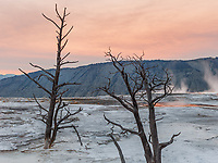 https://Duncan.co/trees-at-mammoth-hot-springs