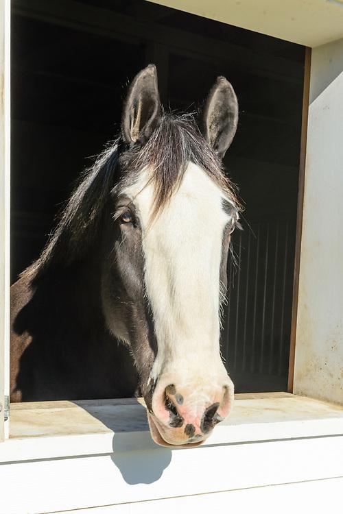 Horses, Stable, 134 Narrow LN East, Sagaponack, NY