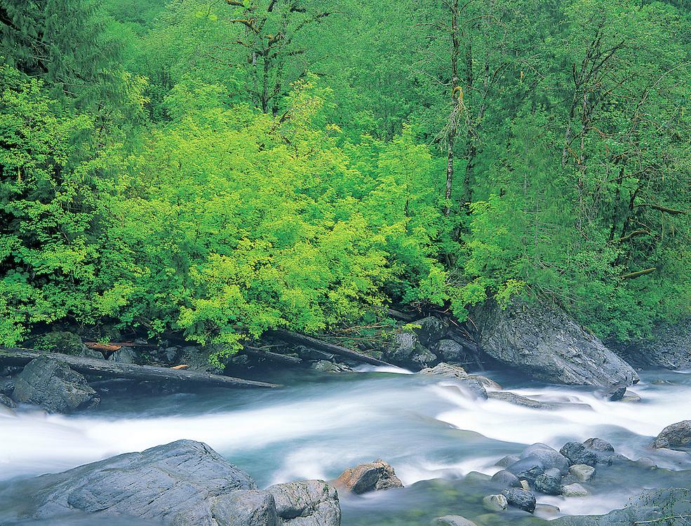 Sauk River surging through forest, North Cascades National Park