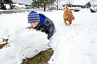 Alex Troyer, 7, rolls a snowball Thursday as he creates more building materials for his front yard fort on Fernan Hill as his dog Bella follows close behind.