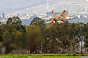 Israeli Air force Fighter jet F16C Airborne After take off