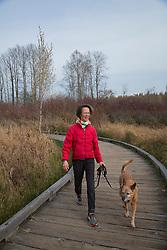 United States, Washington, Bellevue, woman walking dog on boadwalk in Mercer Slough Nature Park.  MR