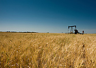 Oklahoma Centennial Farm<br /> Near Coyle OK. Family of John and Kay Williams, Carl and Karen Williams.<br /> On Vasser Road 1/4 mile south of Meridian  West of Coyle road<br /> Pump Jack in wheat field.  Oil well site located in wheat field.