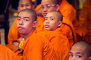 31 JANUARY 2014 - BANGKOK, THAILAND:   Chinese Buddhist monks and novices at Wat Mangkon Kamalawat during Lunar New Year festivities, also know as Tet and Chinese New Year, in Bangkok. This year is the Year of the Horse. Ethnic Chinese make up about 14% of Thailand and Chinese holidays are widely celebrated in Thailand.     PHOTO BY JACK KURTZ