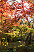 Autumn in Kyoto, Japan. The garden trees are red and yellow