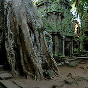 This tree as completely overtaken this part of the temple grounds at Ta Prohm.<br /> <br /> Ta Prohm (Khmer: ប្រាសាទតាព្រហ្ម, pronunciation: brasaeattaproh) is the modern name of the temple at Angkor, Siem Reap Province, Cambodia, built in the Bayon style largely in the late 12th and early 13th centuries and originally called Rajavihara (in Khmer: រាជវិហារ). Located approximately one kilometre east of Angkor Thom and on the southern edge of the East Baray, it was founded by the Khmer King Jayavarman VII as a Mahayana Buddhist monastery and university. Unlike most Angkorian temples, Ta Prohm has been left in much the same condition in which it was found: the photogenic and atmospheric combination of trees growing out of the ruins and the jungle surroundings have made it one of Angkor's most popular temples with visitors. UNESCO inscribed Ta Prohm on the World Heritage List in 1992. Today, it is one of the most visited complexes in Cambodia&rsquo;s Angkor region. The conservation and restoration of Ta Prohm is a partnership project of the Archaeological Survey of India and the APSARA (Authority for the Protection and Management of Angkor and the Region of Siem Reap).