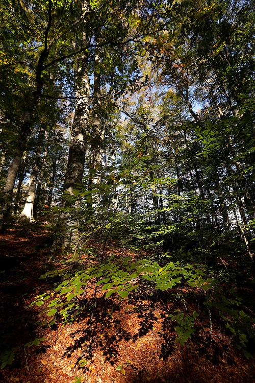 Brezovac forest, Dinara mountain, Croatia.