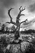 lone tree RMNP
