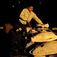 Japan, Tokyo, Worker at tuna fish auction at sunrise in Tsukiji Fish Market