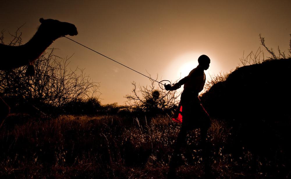 Samburu man with camel at sunset