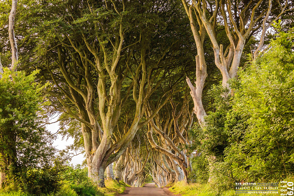 The Dark Hedges is an avenue of beech trees along Bregagh Road between Armoy and Stranocum in County Antrim, Northern Ireland. Photo by Rob Durston ( www.durstonphoto.com )