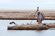 Waterfowl biologist, Howie Singer at Black Brant nest;  Branta bernicla nigricans, Tutakoke River research camp, Yukon Delta NWR, Alaska