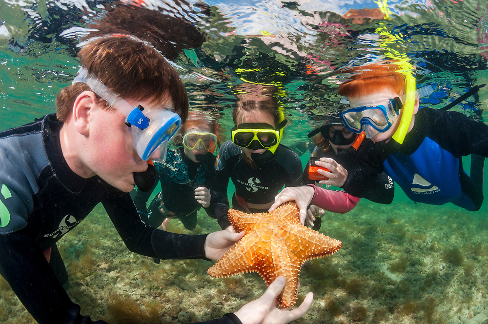 Children learn about the ocean, specifically a sea star in this case, while snorkelling in the Bahamas.