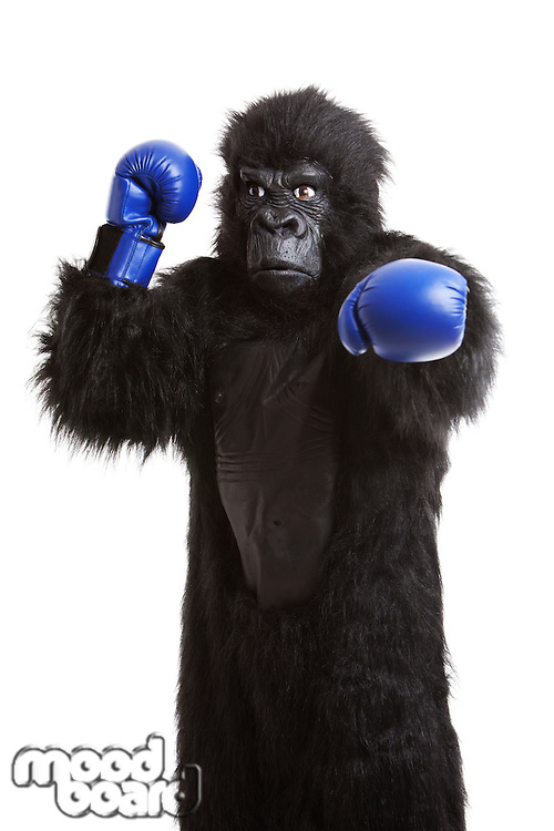 Young man in gorilla costume wearing boxing gloves against white background