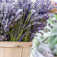 Baskets of English Lavender at a farmers market.