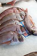 Fresh blue marlin fish on sale at fishmongers at Playa Blanca, Lanzarote, Canary Islands, Spain