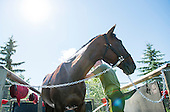 Spruce Meadows - The North American June 30-July 5 2015