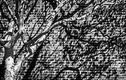The flowing tree branches, brick wall and shadows combine to create a unique alterative experience.