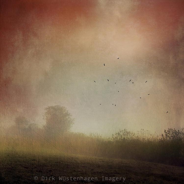 Fog and sunrise on a November morning - texturized photograph