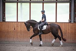 Devroe Jeroen, (BEL), Aaron<br /> Stal Devroe - Nieuwrode 2015<br /> © Hippo Foto - Dirk Caremans<br /> 12/05/15