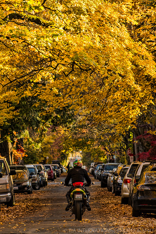 Follow the Yellow Leaf Road, Capitol Hill, Seattle