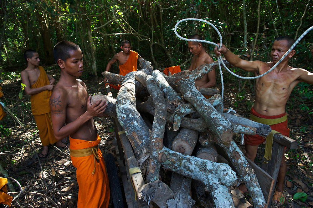 Buddhist monks gather fallen tree branches to use as firewood, Angkor Thom.