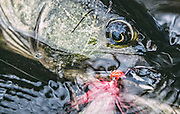 Fly fishing for musky in Northern Wisconsin. <br /> © Adam Alexander Photography 2015<br /> www.AdamAlexanderPhoto.com