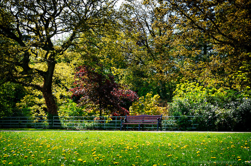 May 1st, 2011, Marley Park, Dublin, Ireland: A bright late spring day brings beautiful sunshine and hopes of summer to the lush foliage and colours of the park, while a lone bench sits waiting for a passer by to rest their weary legs and enjoy the opulant beauty