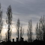 Trees at Dusk, Kent