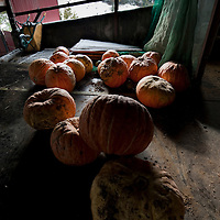 Pumpkins are stored in a farm's loft as snow covers mountains in the Northern Spanish Basque village of Okondo, on December 2010. Photo Rafa Rivas