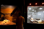 Uberaba_MG, Brasil...Centro de Pesquisas Paleontologicas Llewelyn Ivor Price, em Peiropolis, Uberaba...The Paleontological Research Center  Llewelyn Ivor Price, in Peiropolis, Uberaba...Foto: LEO DRUMOND / NITRO