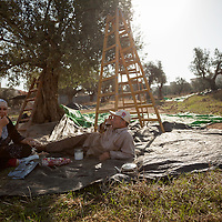 Shafaq, left, and Mustafa Jarar picnic in their olive grove during the olive harvest in Burqin, the West Bank.