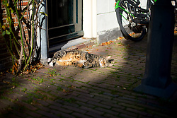 This cat found curls up in the last sunshine. <br /> <br /> After living abroad for more than three years I visited my old home town. Wondering what has changed I packed both my curiosity and a camera. (Original posted as part of a photo essay 'Revisiting Familiar Grounds' here: http://www.basslabbers.com/WP/?p=1320)