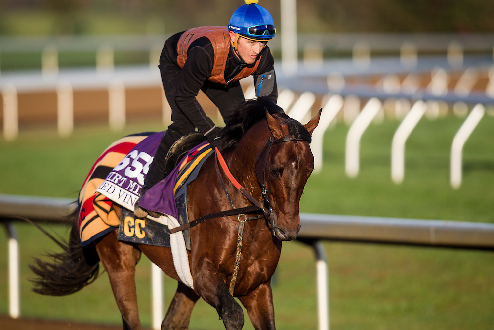 October 29, 2015:   Red Vine, trained by Christophe Clement and owned by Jon and Sarah Kelly & Don and Joan Cimpl, exercises in preparation for the Las Vegas Breeders' Cup Dirt Mile at Keeneland Race Track in Lexington, Kentucky. Alex Evers/ESW/CSM