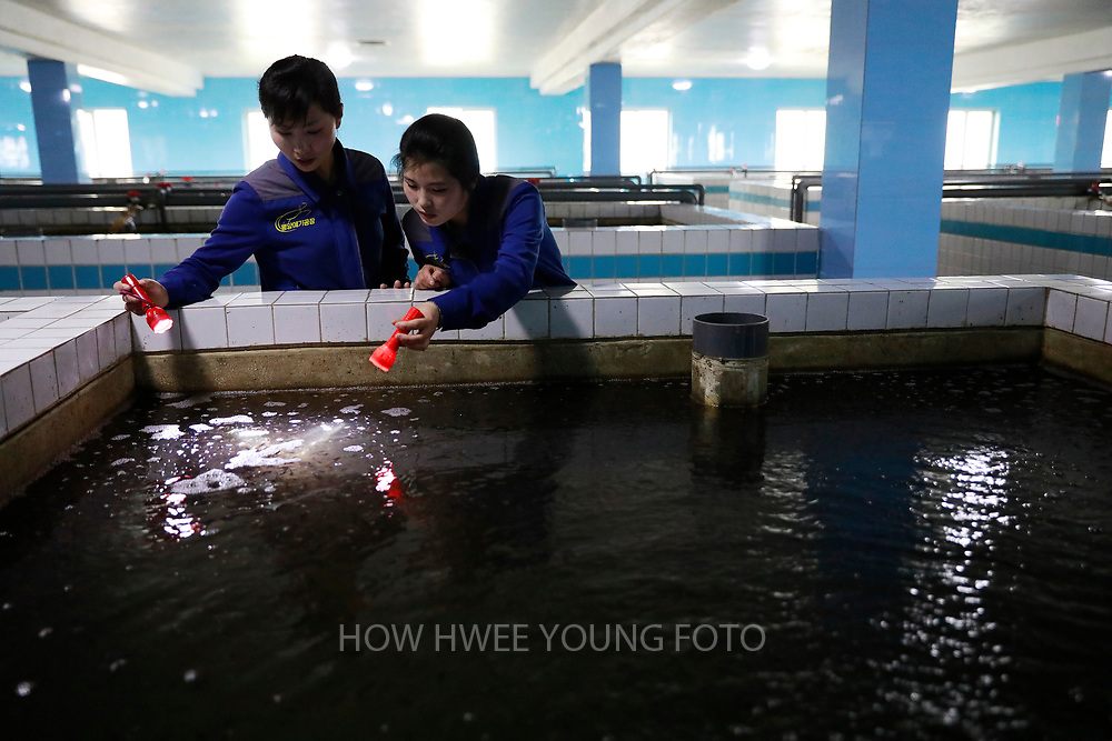 North Korean workers performs checks with torchlights at a catfish farm in Pyongyang, North Korea, 17 April 2017. A North Korean missile exploded within seconds of its launch on the east coast on 16 April, South Korean and US officials say as tensions rise in the region over nuclear issues.