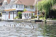 Henley, Great Britain.  Henley Royal Regatta. General View, GV, Canada Geese, on the Henley Reach. River Thames Henley Reach.  Royal Regatta. River Thames Henley Reach.  Saturday  02/07/2011  [Mandatory Credit  Intersport Images] . HRR